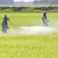 Expectant Mothers Exposed to Pesticides Linked to Autism