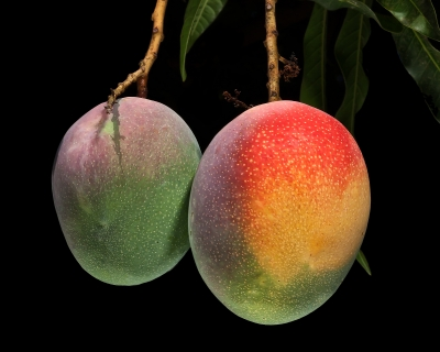 The Miracle of Mango