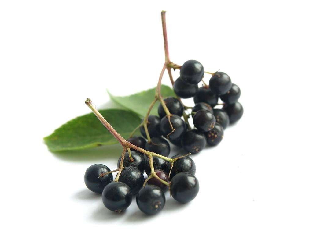 The Benefits of Elderberry