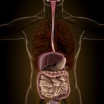 How Your Gut May Affect Your Brain