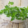 Just in Thyme – 5 Outstanding Benefits