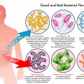 The Gut-Brain Axis Mood Link