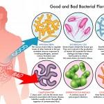The Gut-Brain Axis Mood Link