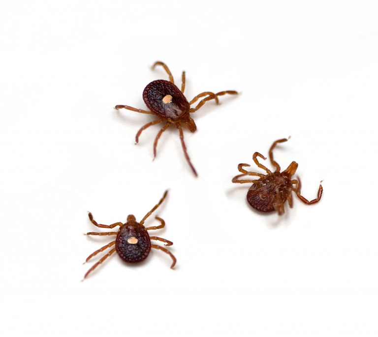 Lone Star Tick Bite causing Deadly Allergy to Meat