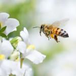 Will Robo-Bees Save Civilization?