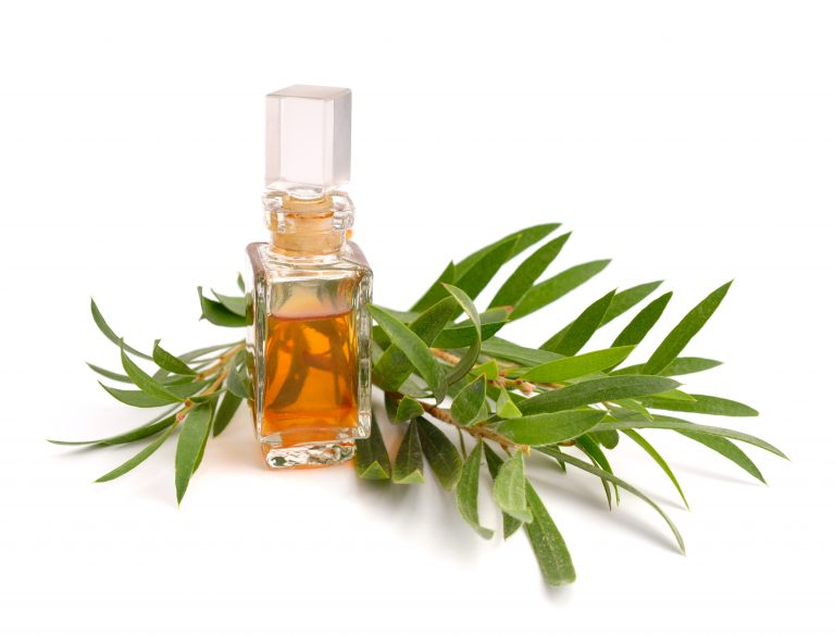 Studies Confirm Why You Should Own A Bottle Of Tea Tree Oil