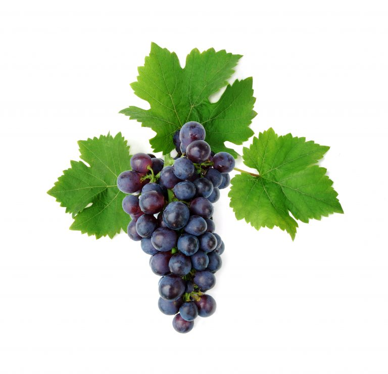 Grapes May Help Prevent or Slow Macular Degeneration