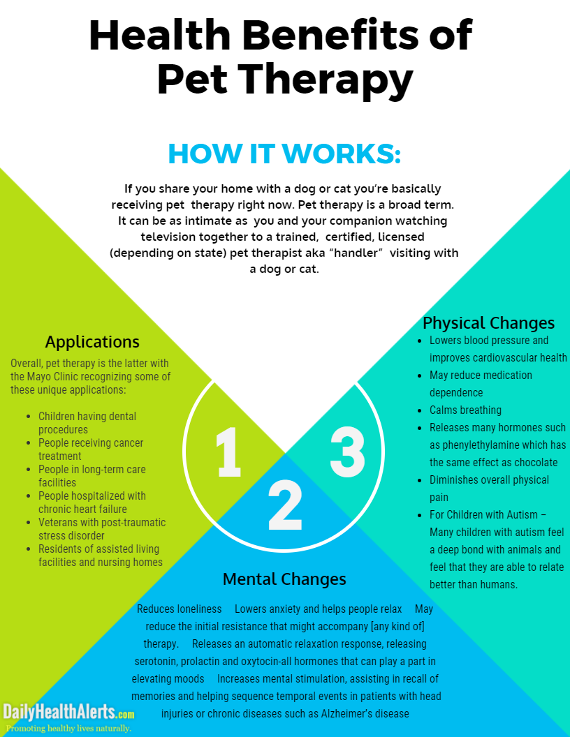 benefits of animal assisted therapy Animal assisted therapy (aat) : definition, benefits and history animal assisted therapy uses the special bond we have with animals to help heal people physically, mentally and emotionally.