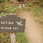 3 Natural Remedies for Poison Ivy, Oak or Sumac