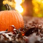 Immune Boosting Recipes for Fall