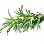 Macular Degeneration Protection: Rosemary